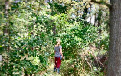 Skogsbad – en snabbguide
